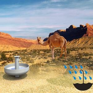 umbrella of the desert