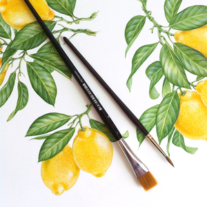 The watercolor illustrations for Lemonades