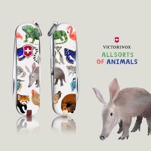 Allsorts of Animals