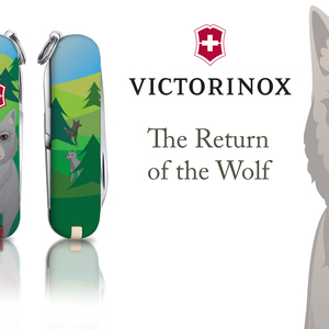 The Return of the Wolf